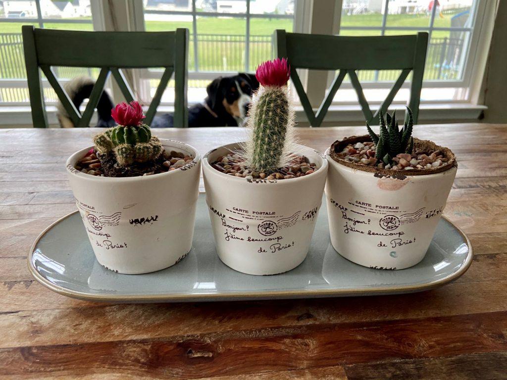 Cacti Succulent Decor